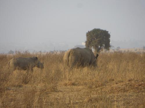kenya-rhino1